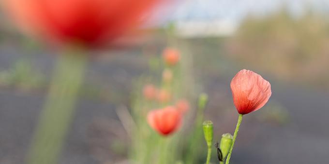 diary_spring_macro